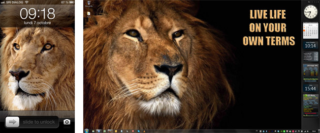 Exhibit A Lion Wallpapers