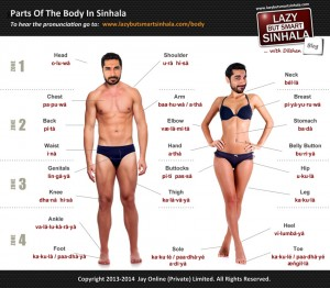 Body in Sinhala - Lazy But Smart Sinhala (large)-1