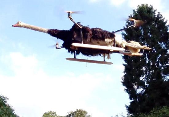 sinhala ostrich drone